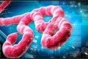 СЗО: Ебола ще убива хиляди седмично