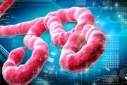 В МЗ обсъдиха готовността на България за посрещане на Ебола