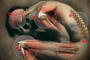 Кости, стави и мускули най-често тормозят работещите