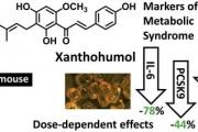 Ксантохумол в бирата проявява антибактериална и антиоксидантна активност