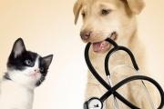 2500 ветеринари бяха обучени за болестите по животните