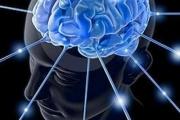 18 март - Световен ден на мозъка