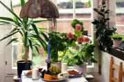 Стайните растения мотивират усвояването на знания