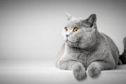 Днес е Световен ден на котките! Почерпете писаната си с лакомство