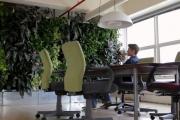 Цветята в офиса понижават умората с 38%