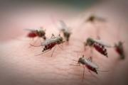 Дете е с нилска треска след ухапване от комар