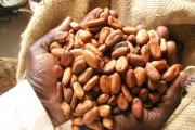 Какаото помага на мозъка