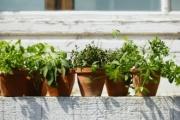 7 полезни билки, които можем да гледаме и у дома
