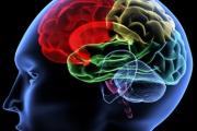 Мозъчен имплант предпазва епилептичните припадъци